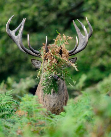 William Richardson/Comedy Wildlife Photography Awards