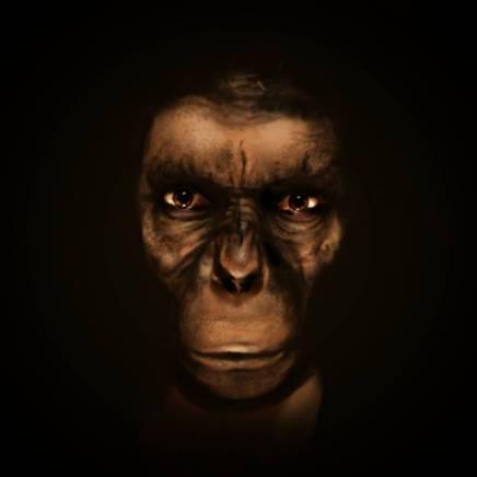 Ape, 2015